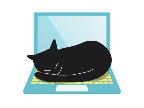 a cat sleeping on a laptop pc